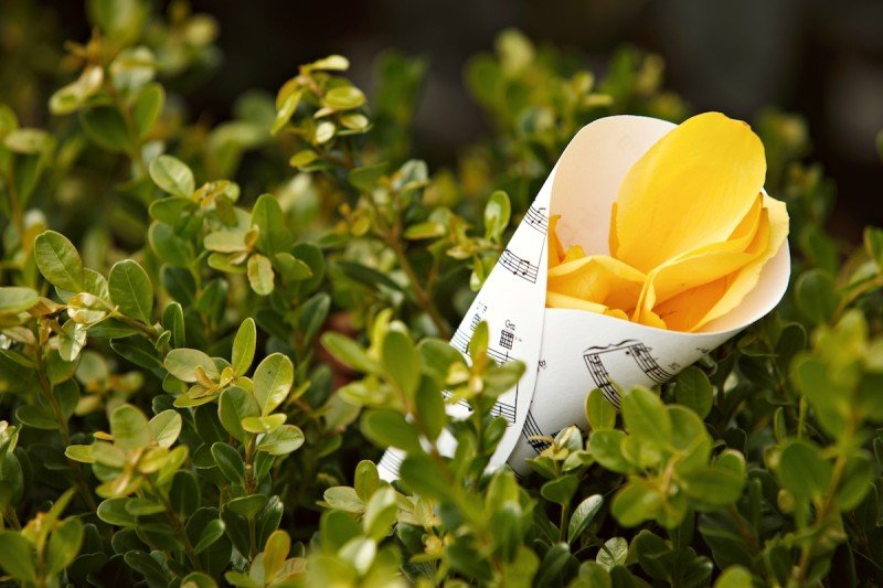 Yellow roses wedding