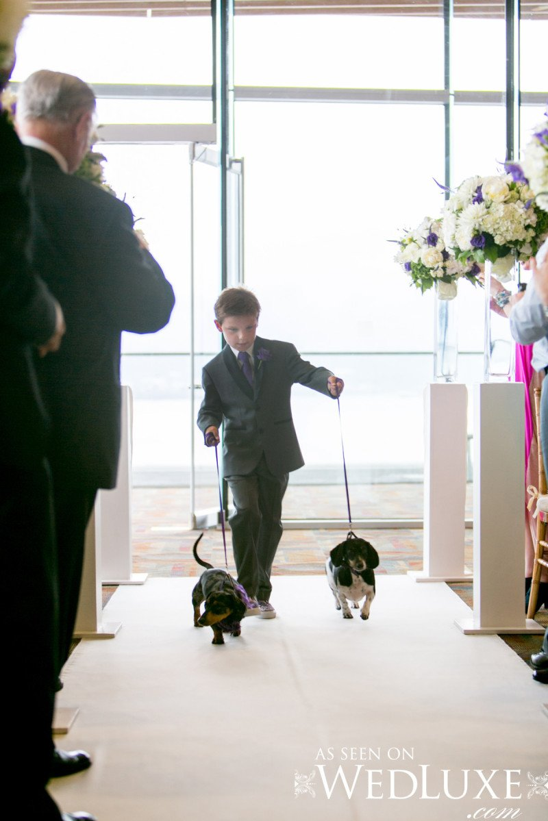 dog ringbearers Alicia Keats Weddings